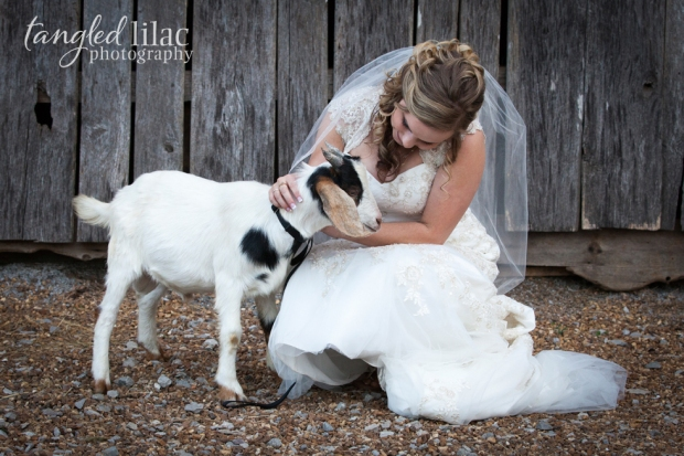 006-farm-wedding-goat-photo-by-tangled-lilac-photography