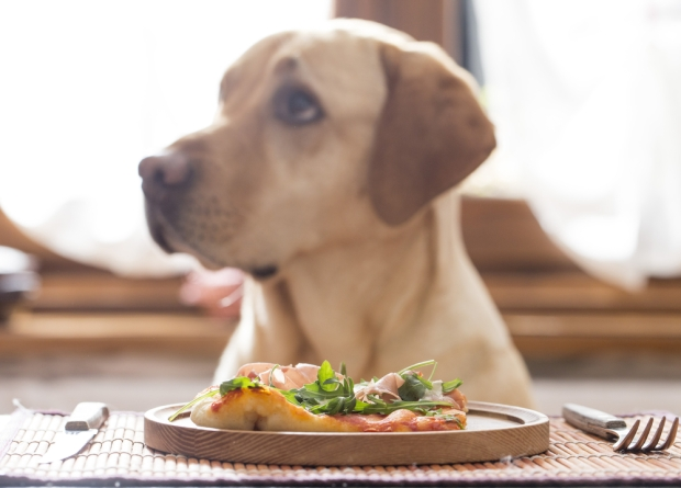 dog-eating-dinner-via-now-here-this-timeout