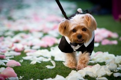 dogs_in_wedding_23jpg-via-traci-domino