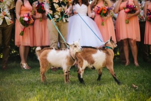 hawaii-tiki-goat-wedding-40-640x427-photo-by-zac-wolf-photography-via-rocknrollbride