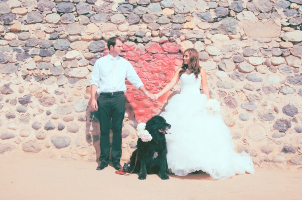 newfoundland-dog-photo-by-molly-davidson-photography-via-darcy-oliver-design
