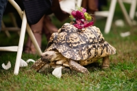 pet-tortoise-ring-bearer-photo-by-the-sweetest-occasion