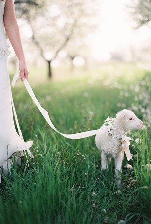 pets-in-weddings-weber-photography-via-brides