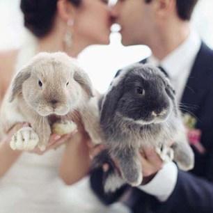 rabbits-photo-by-sonya-khegay-photography-via-ruffled